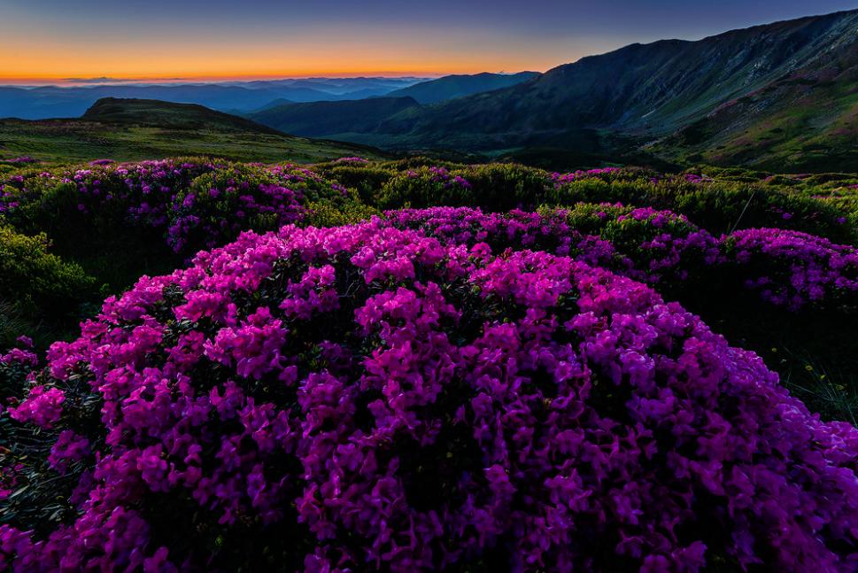 Secret garden in Transylvania. #Gardens #Photos #Photography