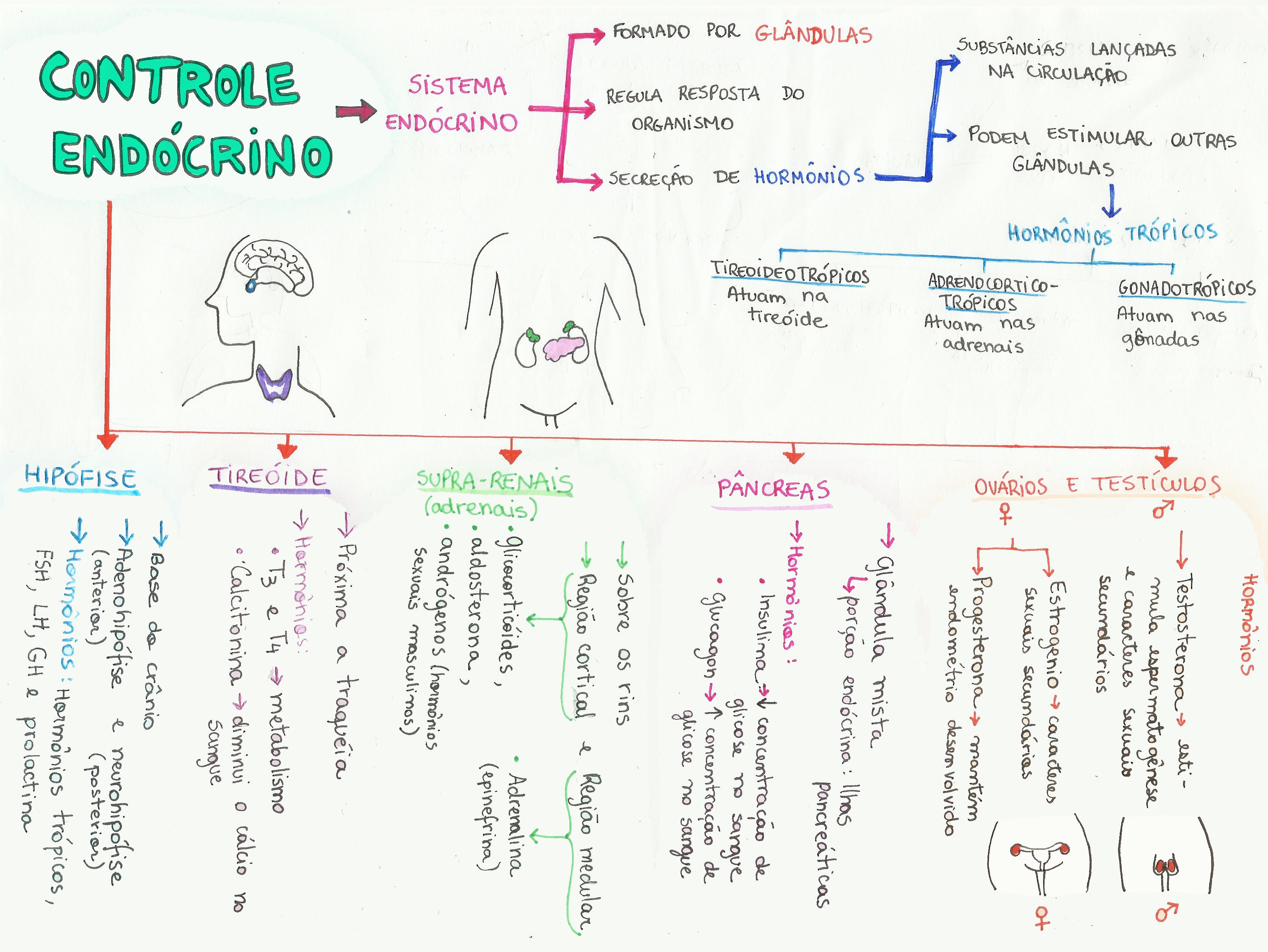 Mapa Mental: Controle Endócrino | Biología, Mapas y Mapas mentales