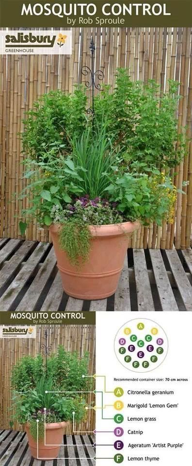 How to keep mosquitoes away | Plants, Outdoor gardens ...