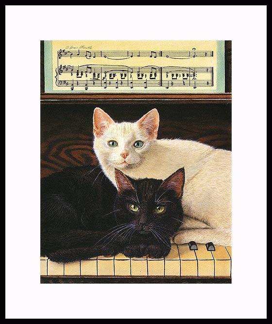libra černá kočička