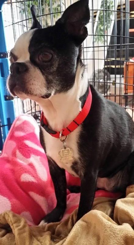 Meet Milly Makenzie KY, a Petfinder adoptable Boston