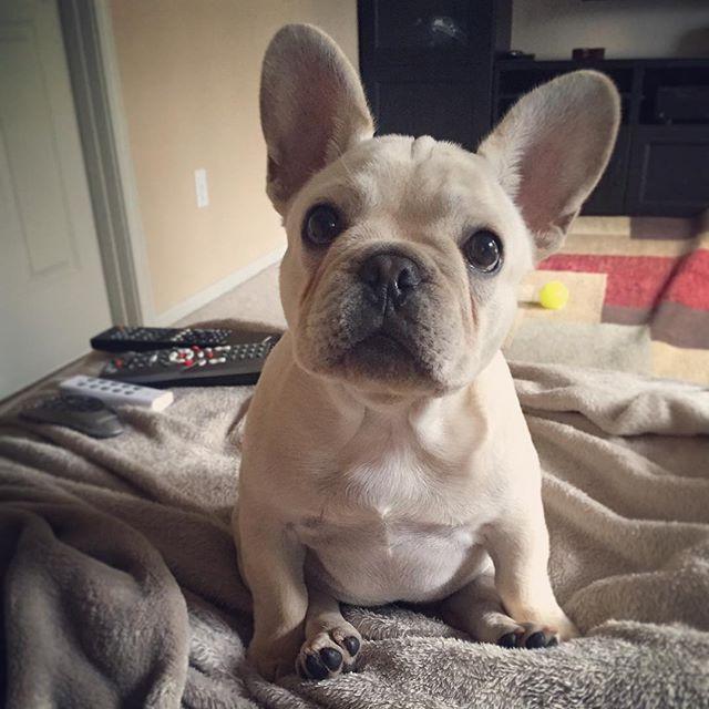 Nala La La On Instagram Good Morning Happyhumpday Puppyfeet