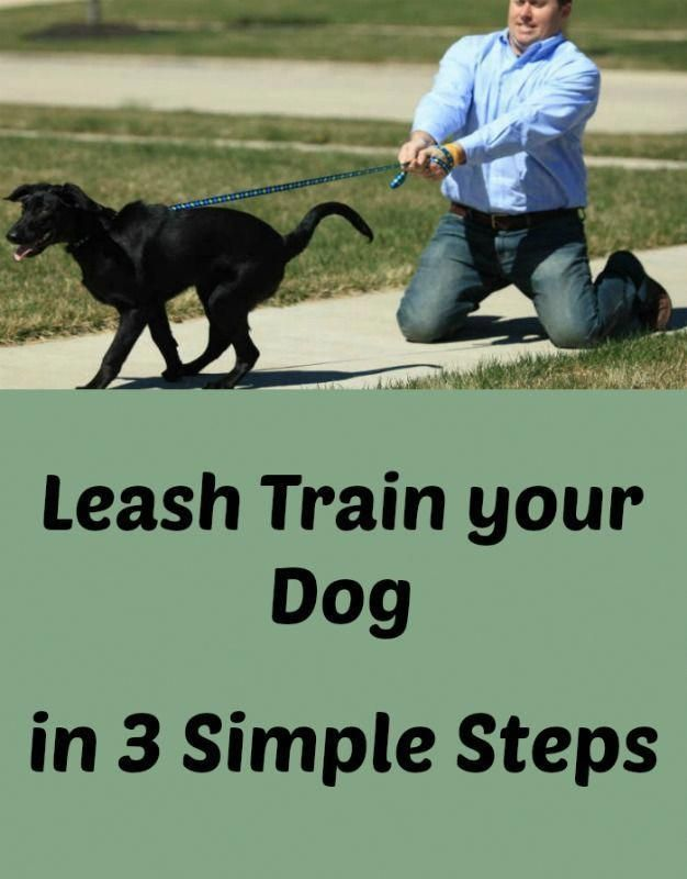 Creative Unraveled Dog Training How To Click This Link Your Dog