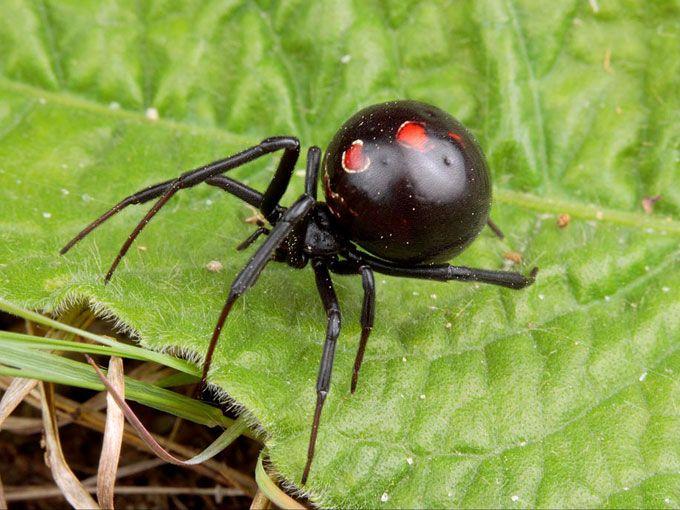 Brazil Amazon Rainforest Spiders   Biodiversity   Black ... - photo#16