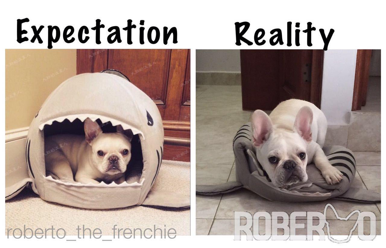Expectation Vs Reality Yep Roberto The French Bulldog