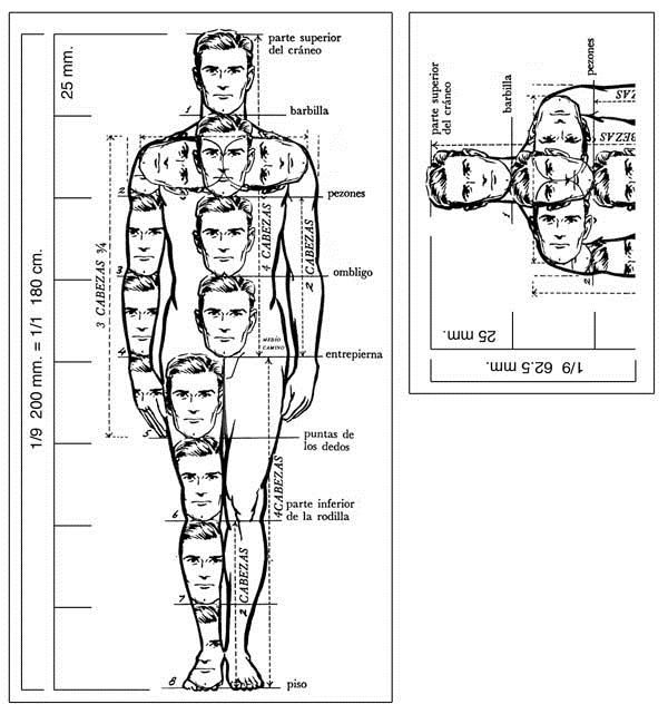 Proporcion De Figura Humana Proporciones Del Cuerpo Humano Cuerpo Humano Dibujo Bocetos Del Cuerpo Humano
