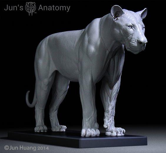 Artstation Lion Anatomy Model Jun Huang Tutorials And Reference