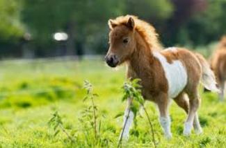 Pin Von Georgeta Frank Auf Soooo Suss Fohlen Niedliche Pferde