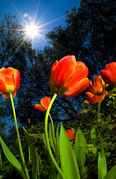 """Цветочное настроение– Подборки– """"Google+"""""""