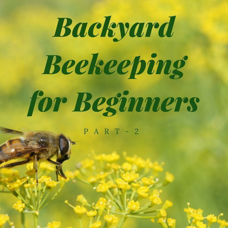 Backyard Beekeeping For Beginners   Part 2 #beekeepingforbeginners  #backyardbeekeeper #beekeeper