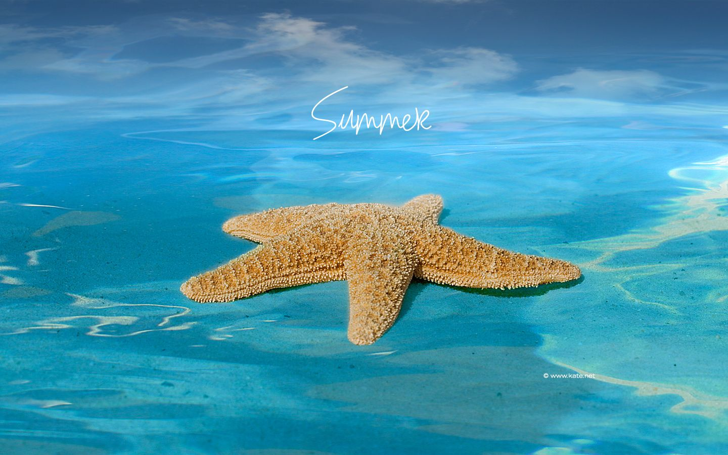images for summertime summer holidays seasons saver screen