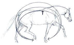 Es muy importante que sepamos lo qué significa la impulsión y por qué debemos pedírselo a nuestro caballo. La impulsión es cuando el caballo remete los c...