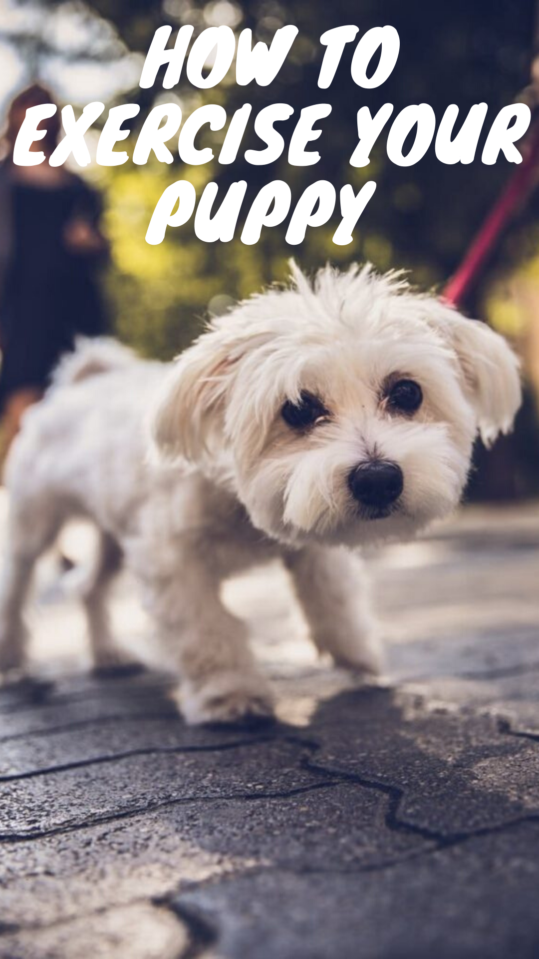How To Exercise Your Puppy In
