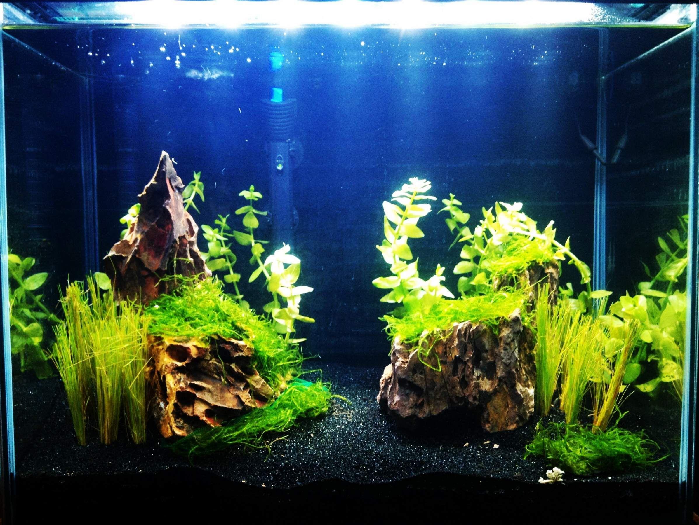 Aquarium fish tank sand - Black Sand Aquarium Freshwater Google Search