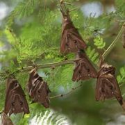 How To Get Rid Of Bats In Your Attic Ehow Getting Rid Of Bats Bats In Attic Bat Repellent
