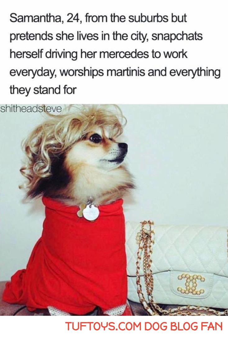 Avid fans of tuftoys dog blog fans pinterest fans memes