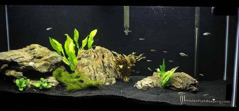 Getting another tank have aquarium advice aquarium for Black sand fish tank