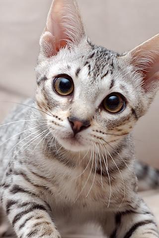 Estou de olho em você!