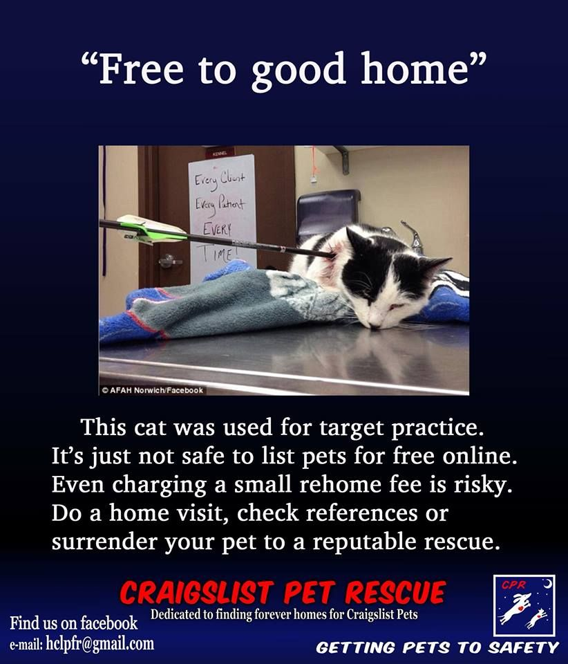 Pin By Cira12 On Let S Stop The Barbarians Craigslist Pets Cheap Pets Target Practice