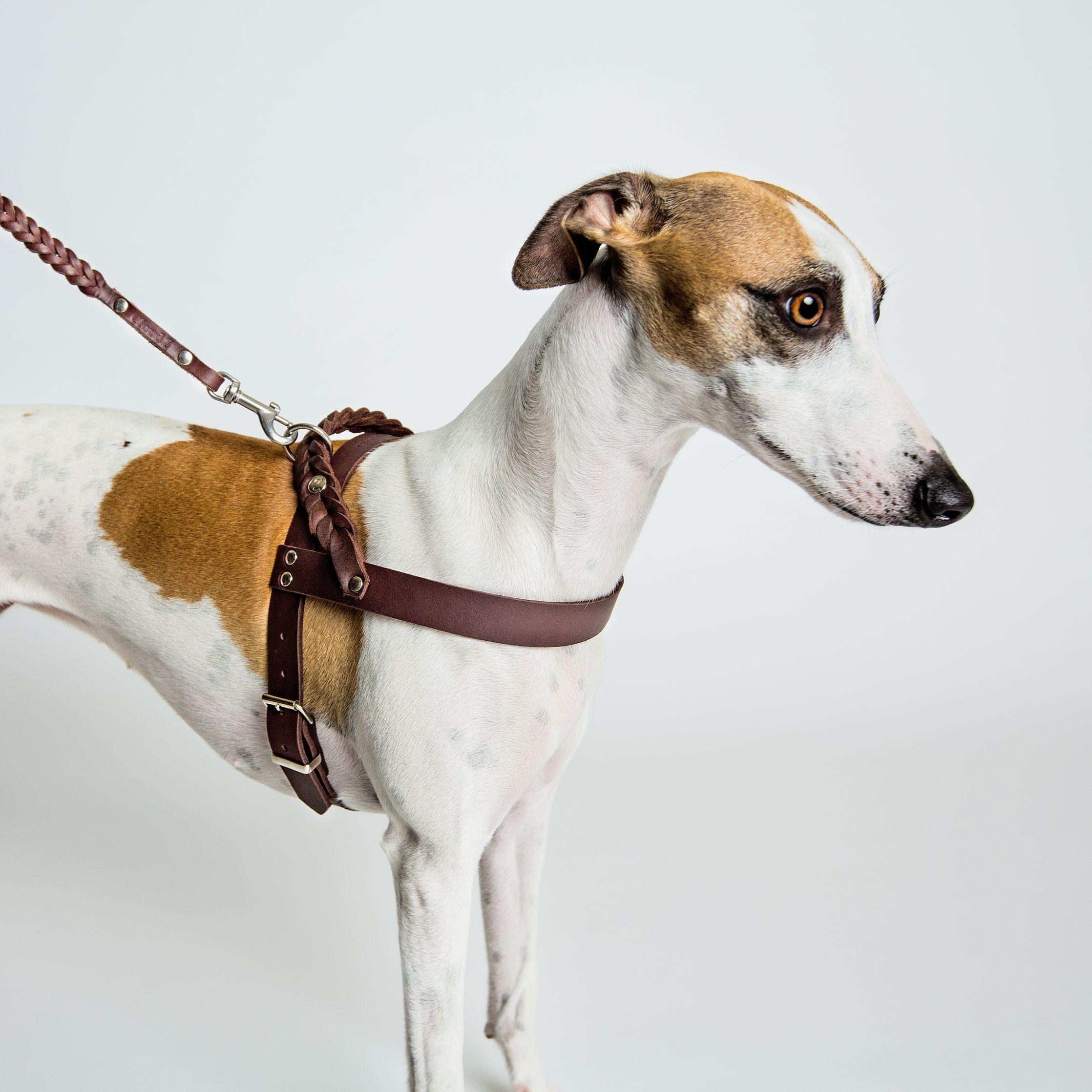 Cloud7 Designer Leather Dog Harness By Lavish Tails