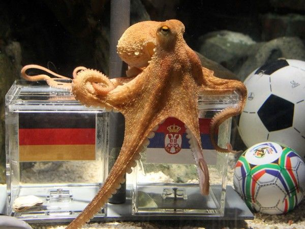 You May Have Not Heard These About These Facts On Octopuses Paul The Octopus Octopus Coconut Octopus