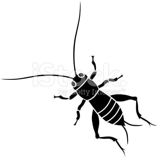 A Vector Illustration Of A Cricket Insect In Black And White Cricket Insect Vector Art Vector Illustration