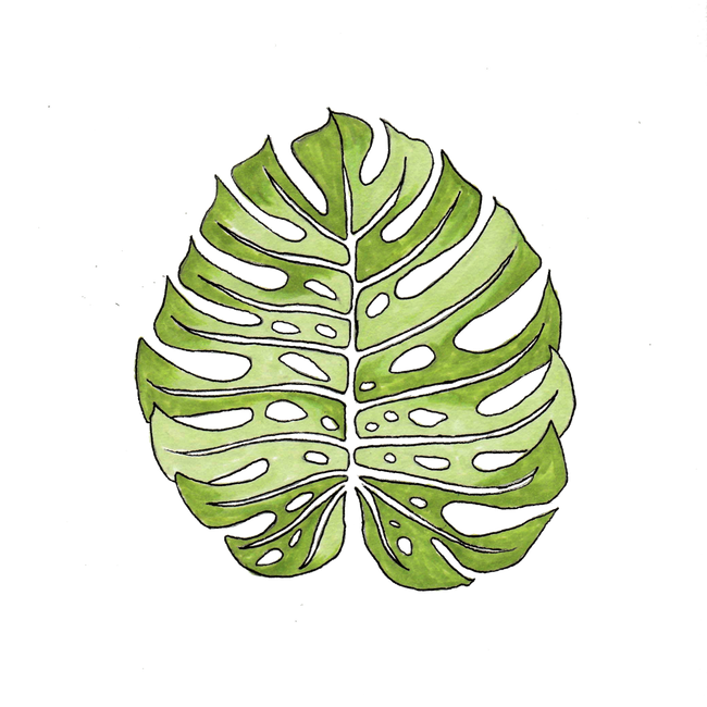 Monstera Leaf Copic Marker And Ink Drawing Art Print By La Petite Mesange X Small In 2020 Copic Marker Art Ink Drawing Copic Markers