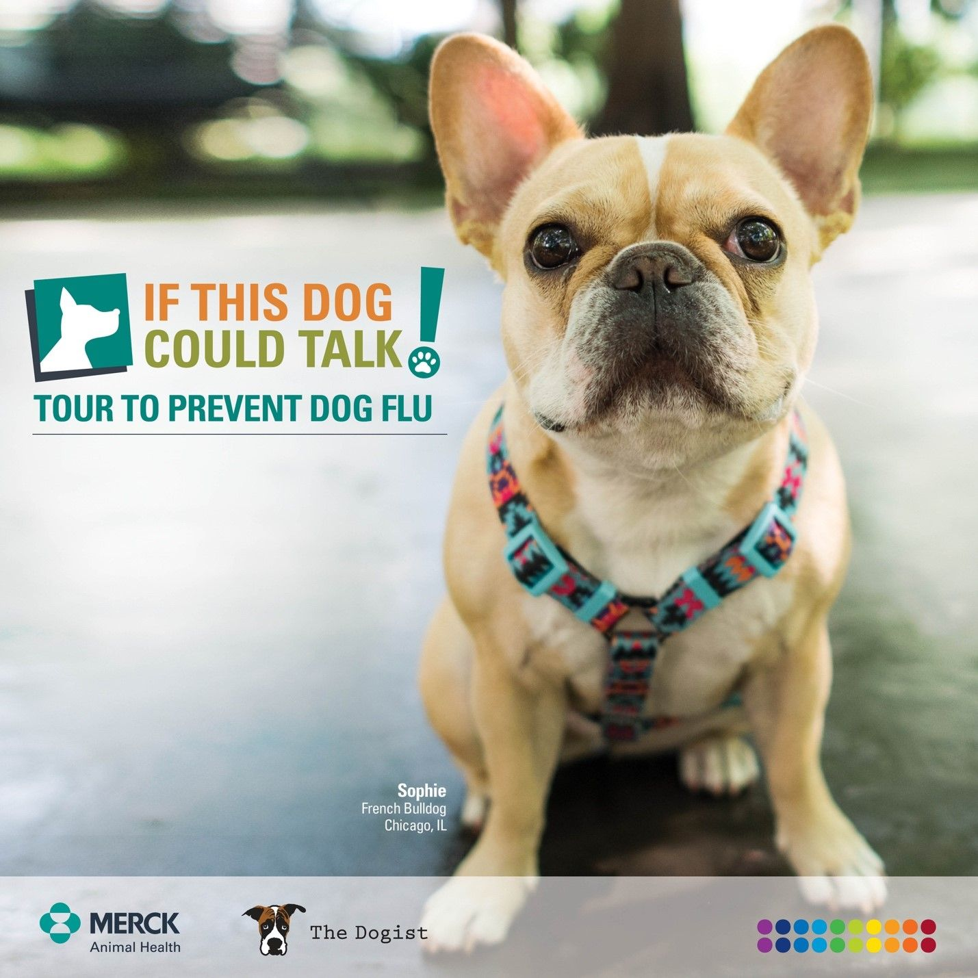 Download New P O Alfrom Merck Animal Health And Thedogist Learn About Protecting Your Dog From Dogflu Ifthisdogcouldtalk Ad