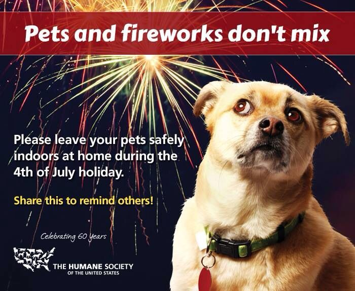 Remember Your Dogs Tonight Animals For Kids Pets Pet Safety