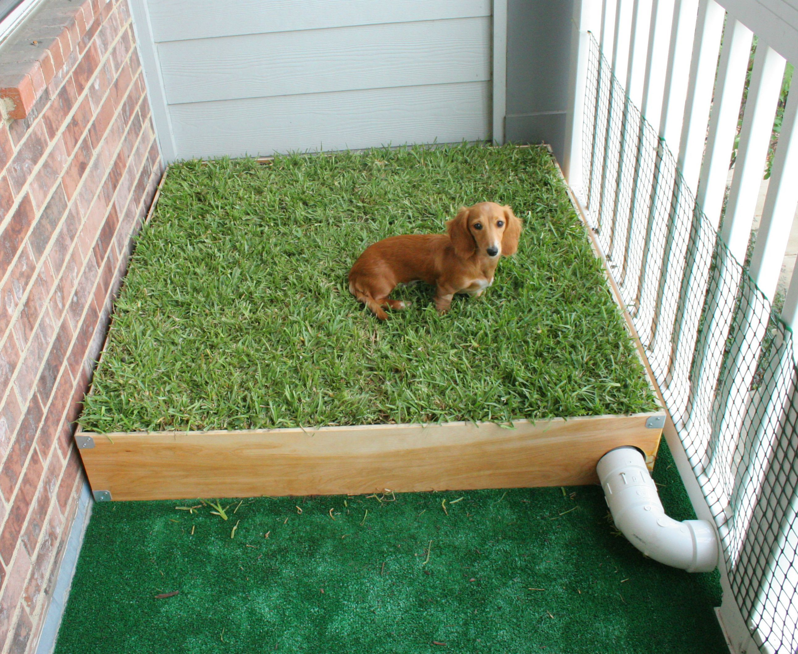 Dog porch potty with real grass and drainage system grasses porch and dog for Training dogs to go to the bathroom outside