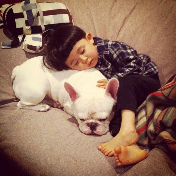 Japanese Boy And His Best Friend Bulldog Cute French Bulldog