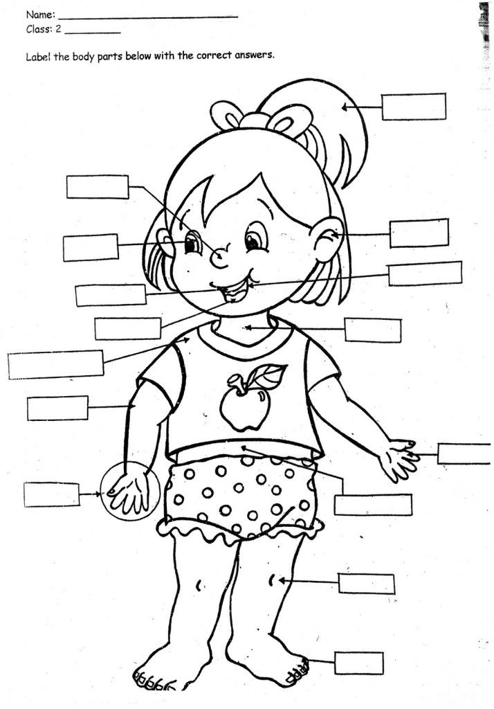 Print Body Parts Coloring Pages For Kids Laptopezine English