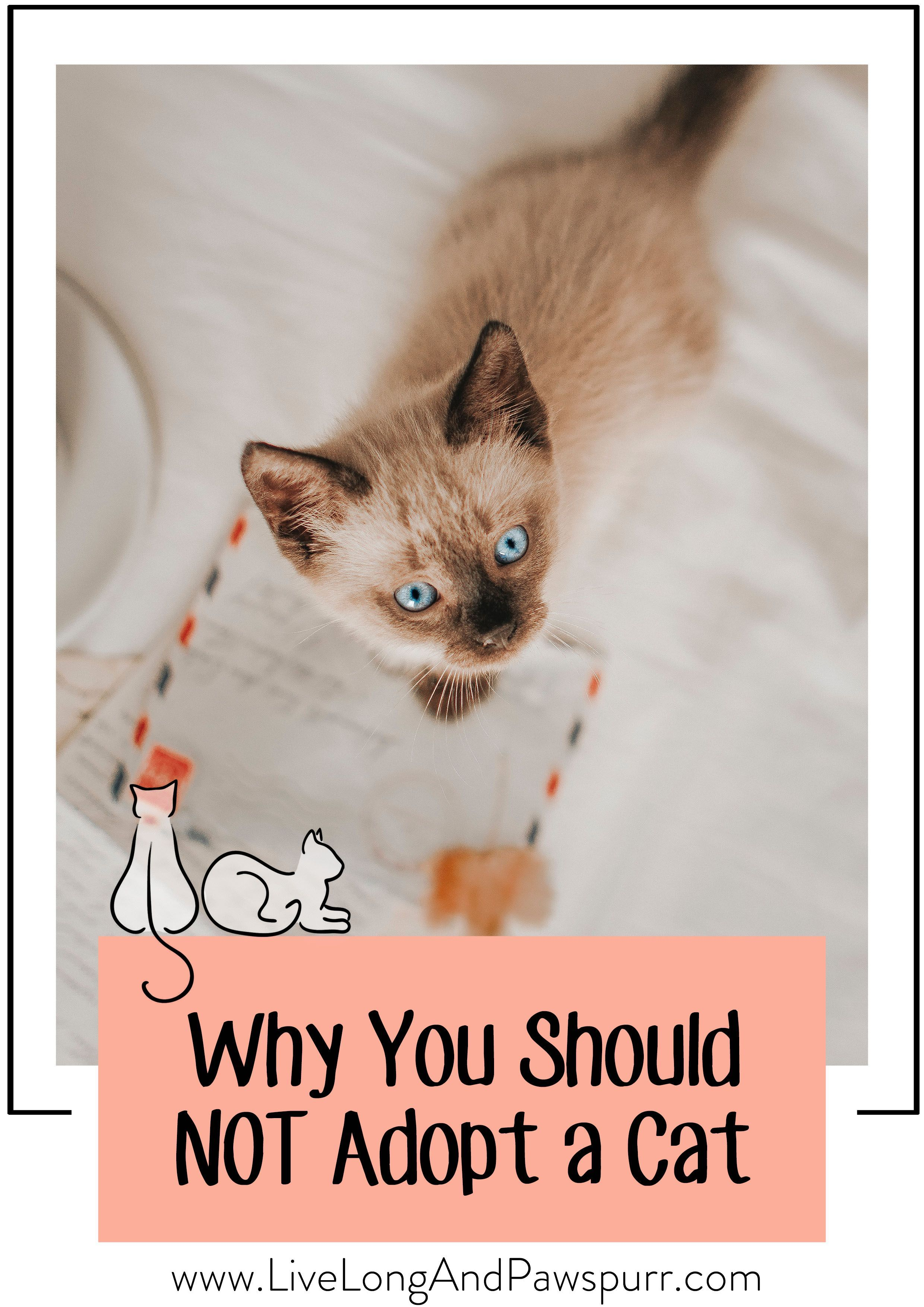 Why You Should Not Get A Cat Cats Cats Outside Getting A Kitten