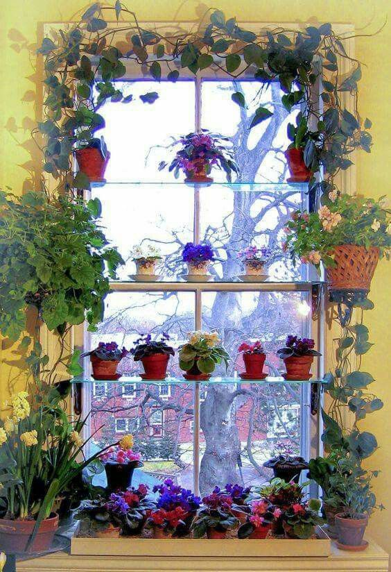 Window Sill Gardening: Begonias, African Violets, Hyacinths, And Vines.  Photo: Kevin Lee Jacobs   Iu0027d Love To Do This In My Windows But With  Orchids!