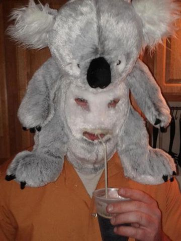 Koala Man Is Parched Funny Stuff Pinterest Funniest Photos