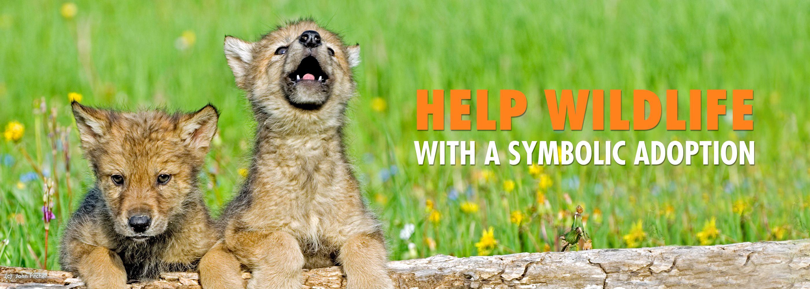 Adopt A Wild Animal And Help Protect Wildlife Wildlife Adoption And Gift Center Animals Wild Animals Animal Abuse