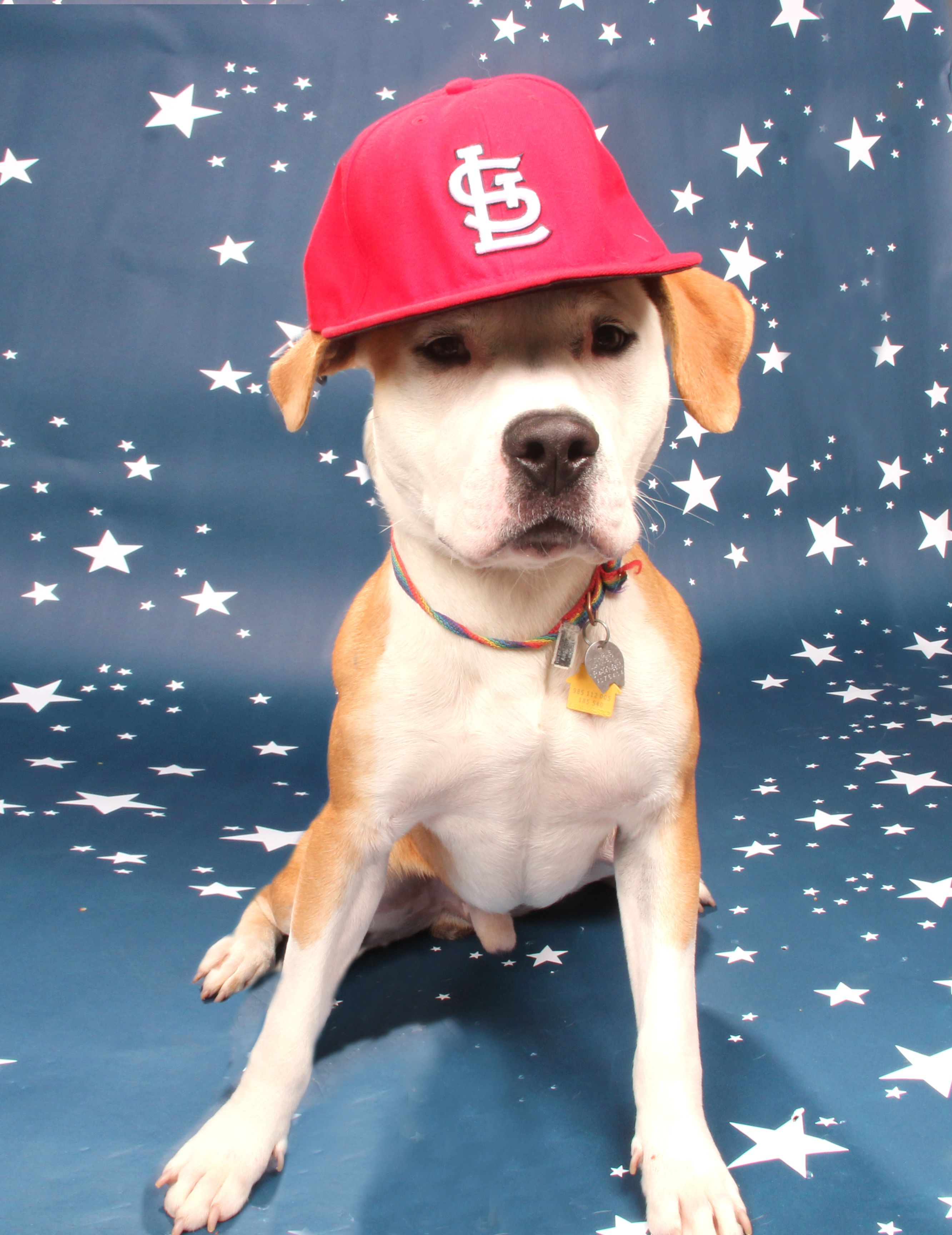 Go Cards! Best Pics of the Week Cute animal pictures
