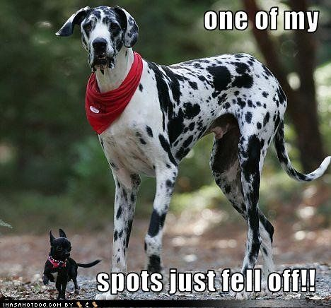 One Of My Spots Just Fell Off Funny Dog Photos Funny Dogs