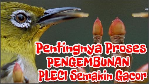 Manfaat Proses Pengembunan Di Pagi Hari Bagi Burung Pleci Burung