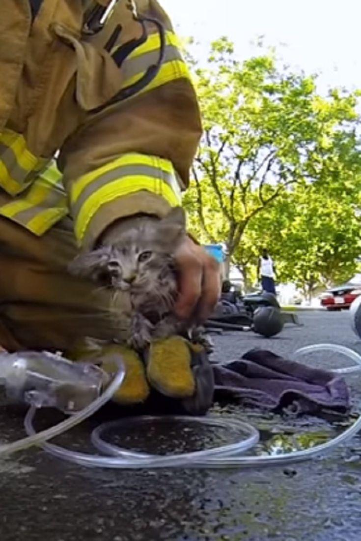 Firefighter A Real Hero Sаvе А Dоg's Lifе (VIDЕО)