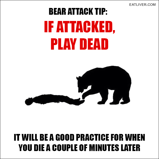 Bear Attack Tip Sarcastic humor, Really funny, Funny quotes