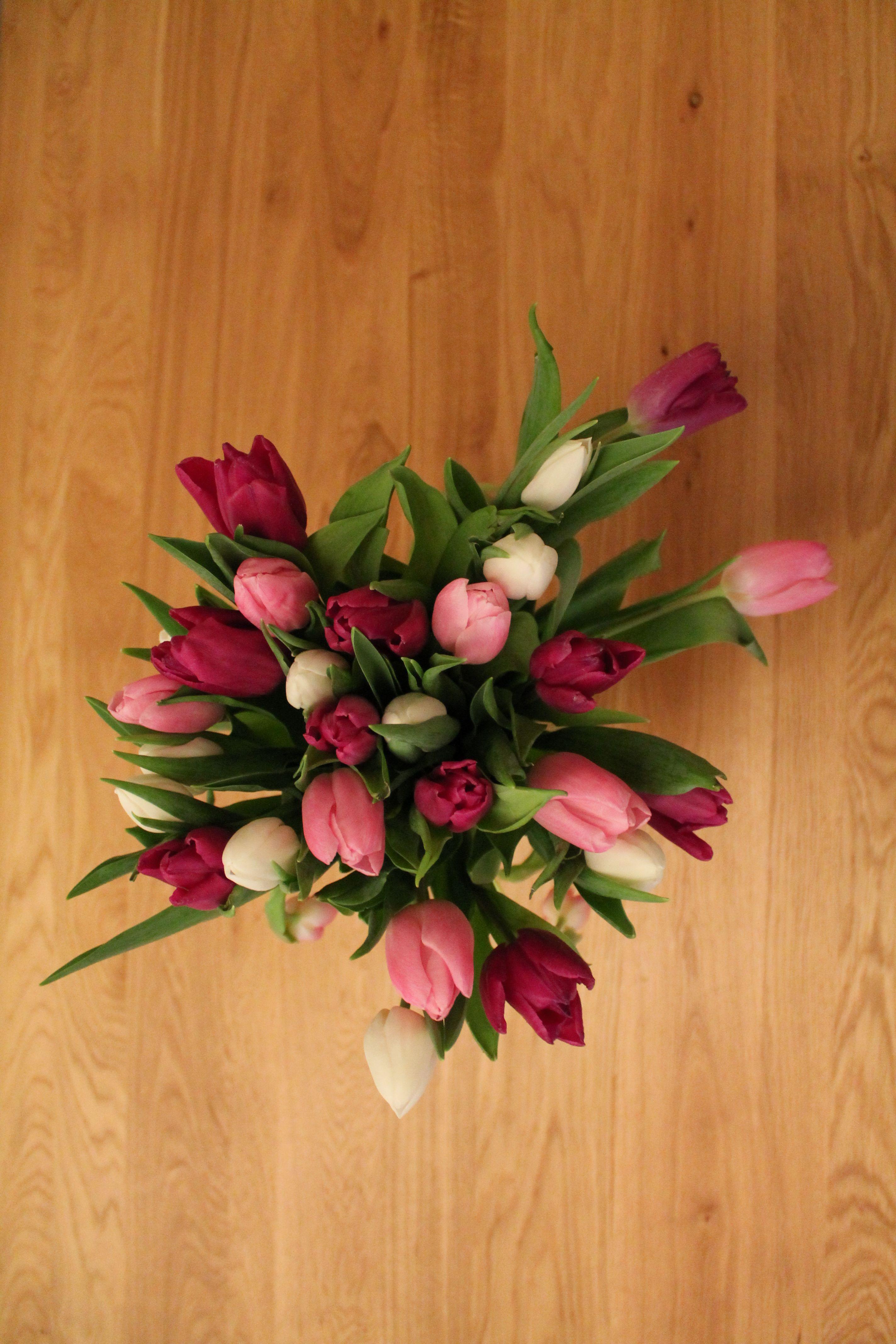 Tulipanes Holandeses 3 Tulips Tulipanes Arreglos