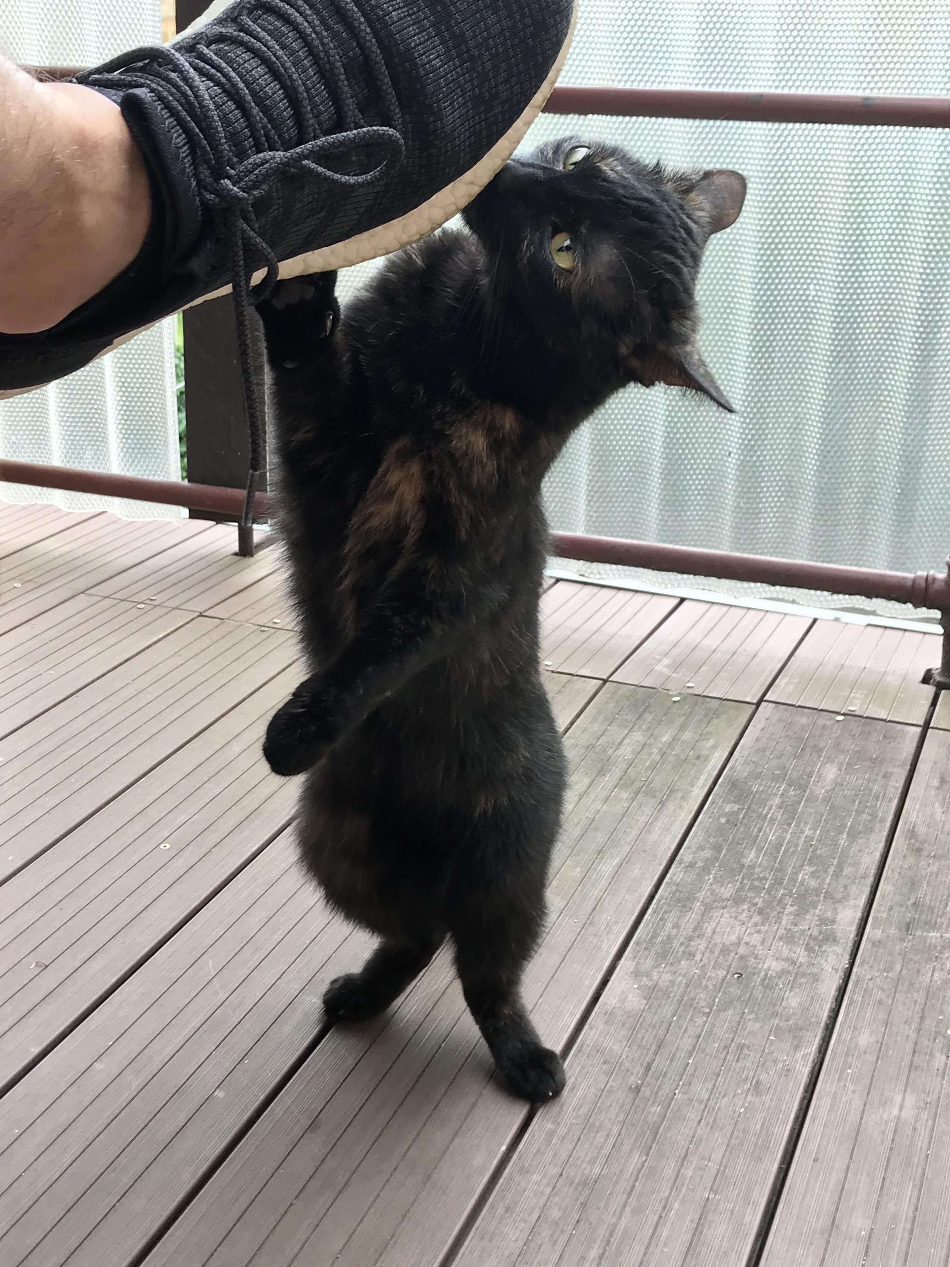 shock cat meme scaryching post