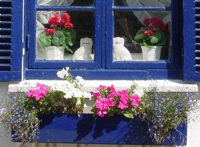 Fioriere Per Persiane ~ Petunia fiori e balconi 2 pinterest balconi e fiori