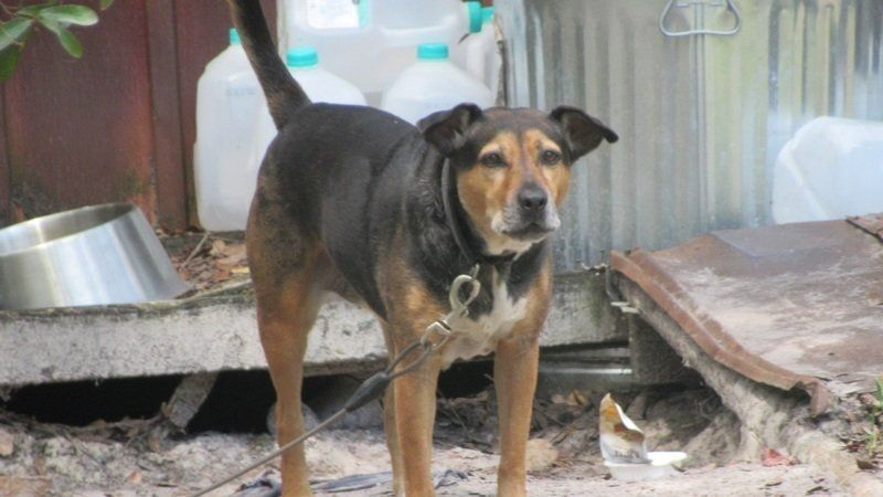 Petition update · You can stop Dog Chaining in Nassau