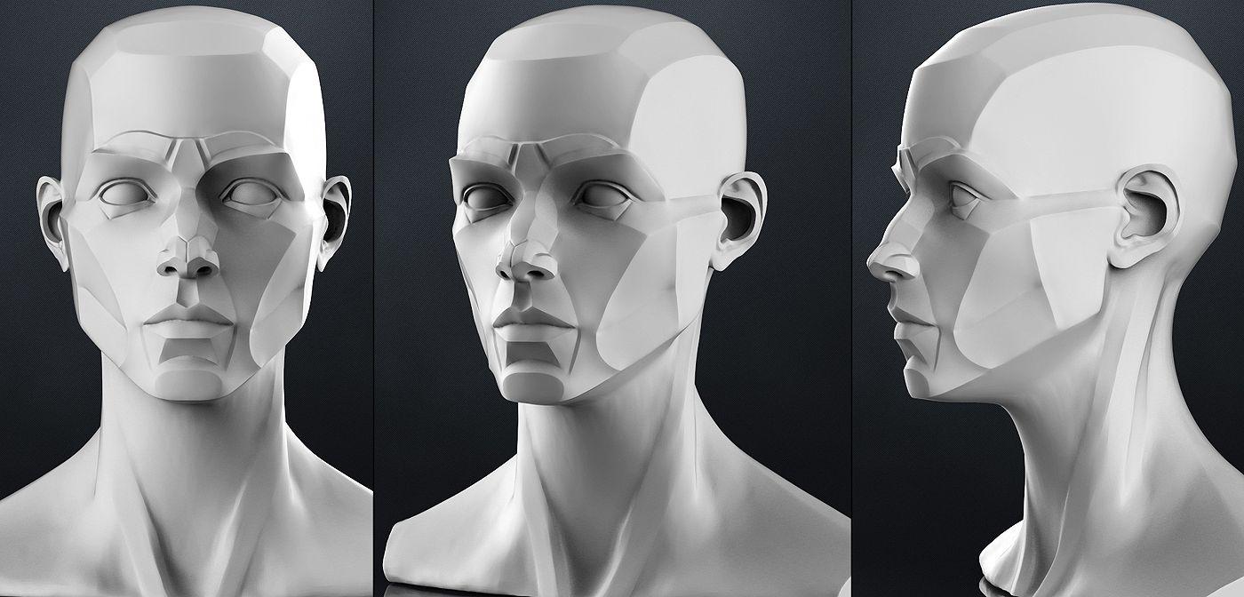Planes of the head - Female | 3D model | Anatomía, Google y Escultura