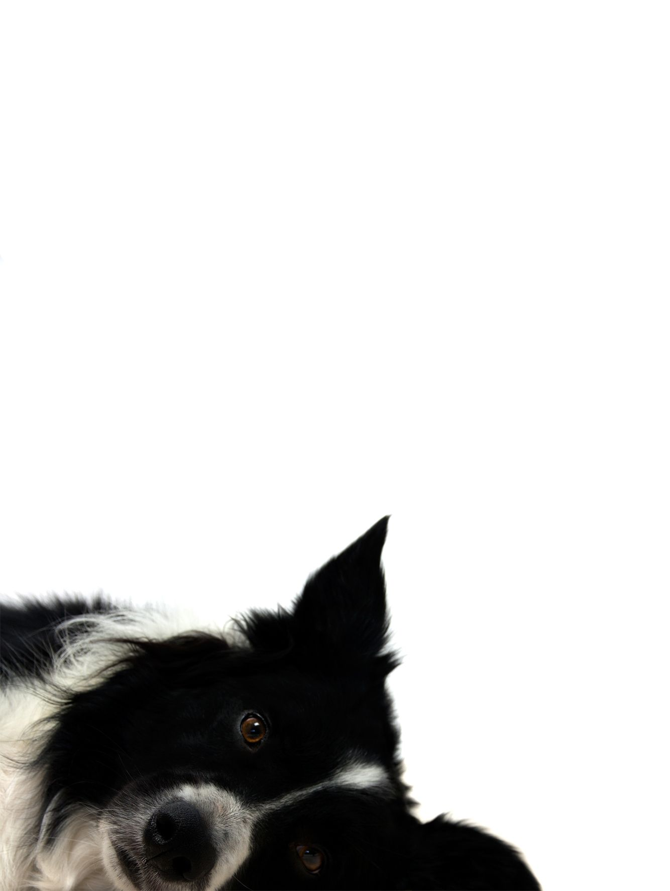 Pin by denise symes on animals pinterest animal dog and pup