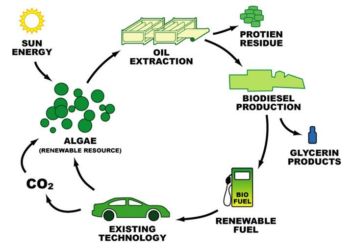 The Algae Cycle Energy Resources Biomass Energy Green Energy