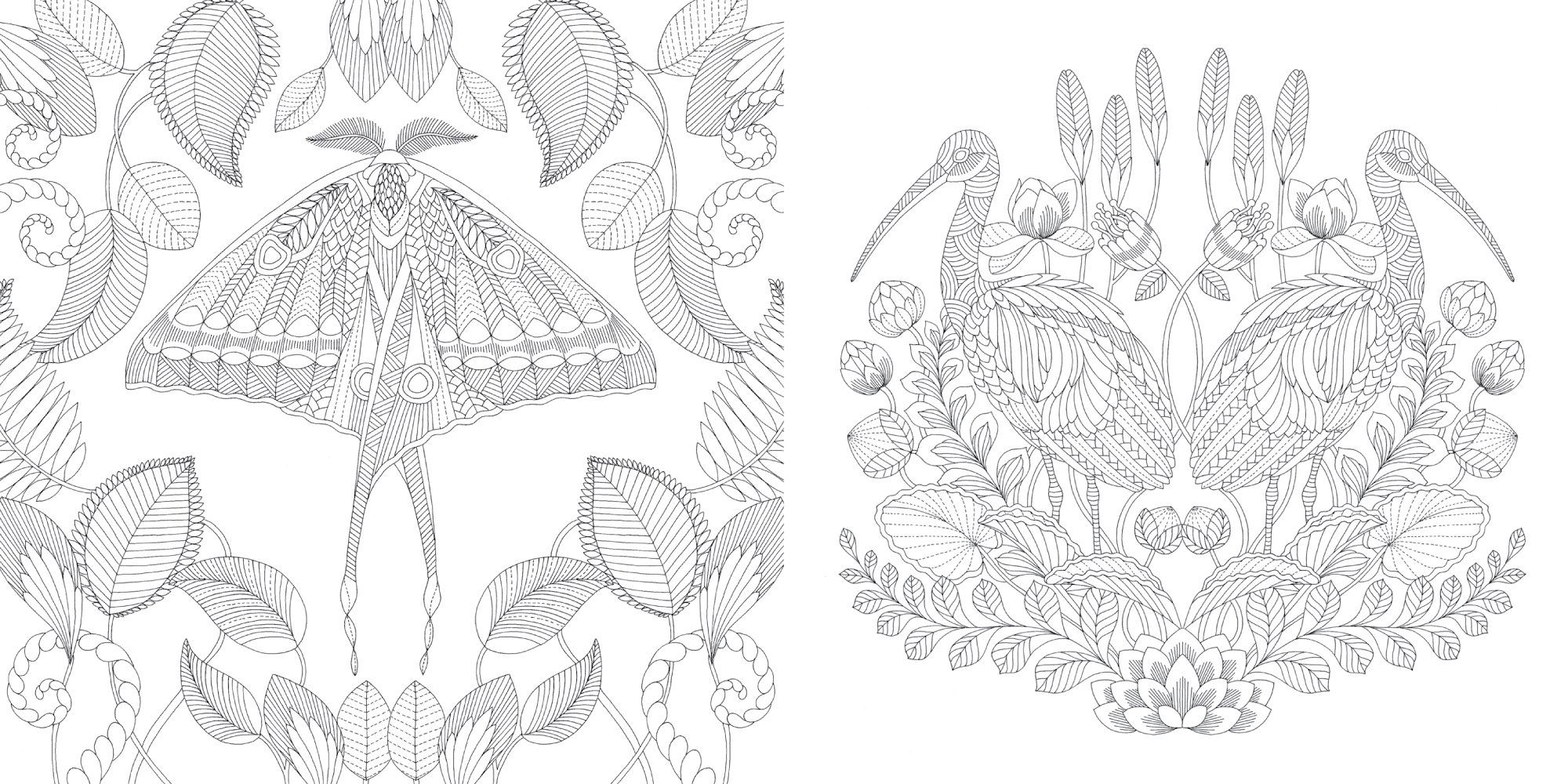 Millie Marottas Tropical Wonderland A Colouring Book
