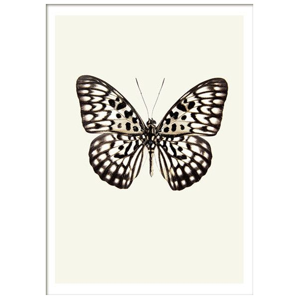 Vintage Butterfly, plakater ❤ liked on Polyvore featuring accessories